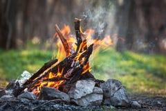 Skogkol för brasa på våren av brand Royaltyfri Foto