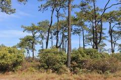 Skogkulle och himmel arkivfoton