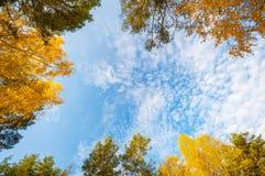 Skoglövverk och bakgrund för blå himmel arkivfoton