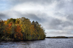 skoglake Fotografering för Bildbyråer