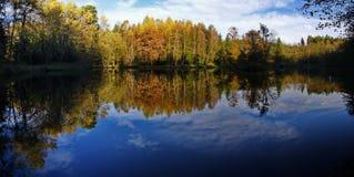 skoglake Arkivbild