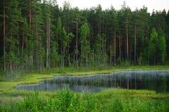 skoglake Arkivfoton
