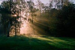 Skoglandskap Royaltyfria Bilder