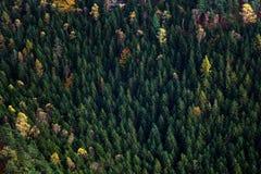 Skoglandskap av den bohemSchweiz nationalparken Detalj av träd, Pravcicka port, Tjeckien royaltyfria bilder