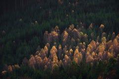 Skoglandskap av den bohemSchweiz nationalparken Detalj av träd, Pravcicka port, Tjeckien royaltyfri bild
