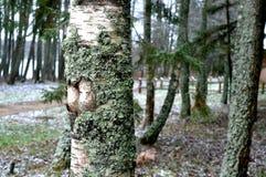 Skoglandskap Europeiska skogar Vintern skissar fotografering för bildbyråer