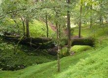 Skoglandskap ger fred och tystar royaltyfri bild