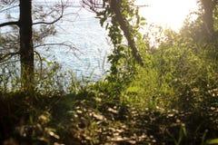 Skoglandskap, grönt gräs i solen, växter i solen, vandringsled i parkera Royaltyfri Foto