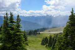 Skoglandskap i bergen, olympisk nationalpark, Washington, USA fotografering för bildbyråer
