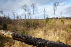 Skoglandskap i hösten från tornet för visning för jägare` s fotografering för bildbyråer