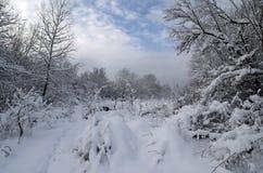 Skoglandskap i solig dag Blå himmel och snö på filialerna Royaltyfri Bild