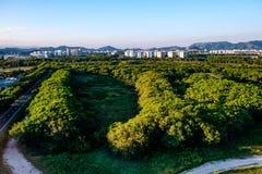 Skoglandskap med andelsfastigheter i bakgrunden, nära Vila Panam royaltyfria foton