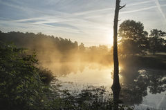 Skoglandskap med ljung på soluppgång Royaltyfri Fotografi