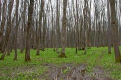 Skoglandskap med vatten och gyttja Royaltyfri Fotografi