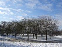 Skoglandskap med vintersnö och blåa himlar royaltyfri bild