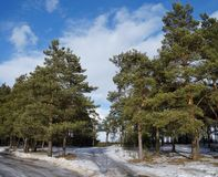 Skoglandskap på vårtid royaltyfri bild