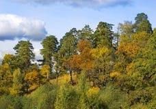 Skoglandskaphöst Den blandade skogen - sörjer, ekar och buskar arkivfoto