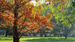 skogleaves Arkivfoto