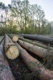 Skogledning Royaltyfri Bild