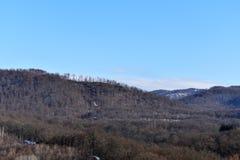 skogligganden sörjer Royaltyfri Fotografi