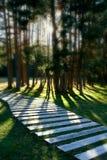 skogliggandequiet Arkivfoto