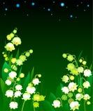 Skogliljar på en vit bakgrund Arkivbild