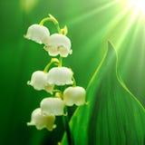 Skogliljar p? en vit bakgrund arkivbild