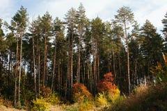 Skoglinje i höstfärger Arkivfoton
