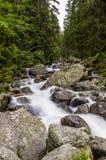 Skogliten vik Royaltyfri Fotografi