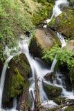 Skogliten vik i nationalparken för Los Alerces, Chubut, patagonia Argentina royaltyfria foton