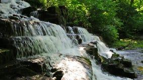 Skogliten vik och vattenfall stock video