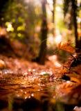 Skogliten vik under höst Arkivbilder