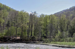 Skogliv Arkivbilder