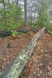 skoglivstid fortfarande Royaltyfri Bild