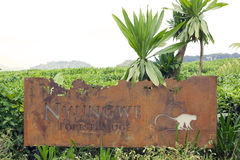 skoglogenyungwe Royaltyfria Foton