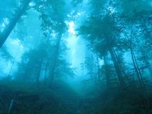 skogmagi Royaltyfri Bild