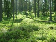 skogmagi Arkivfoton