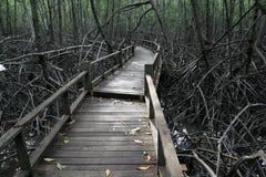 skogmangrove Royaltyfria Bilder
