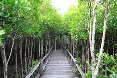 skogmangrove Royaltyfri Foto