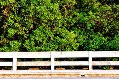 skogmangrove Fotografering för Bildbyråer