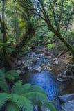 Skogmarkis över ström i regnskog Arkivbilder