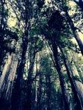 Skogmarkis och trädstammar Fotografering för Bildbyråer
