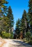 Skogmiljöbakgrund med gräsplan sörjer Royaltyfri Bild