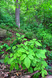 skogmississippi palisades Arkivfoton