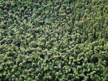 Skogmodellabstrakt begrepp av stora bambutrees Royaltyfri Bild