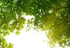 skogmorgon Royaltyfri Bild
