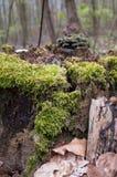 Skogmossan royaltyfri foto