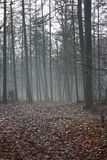 skogmystic Arkivfoton