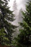 skogmystic royaltyfria bilder