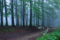 skogmysticväg Royaltyfri Foto
